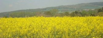 South Downs over a field of rape