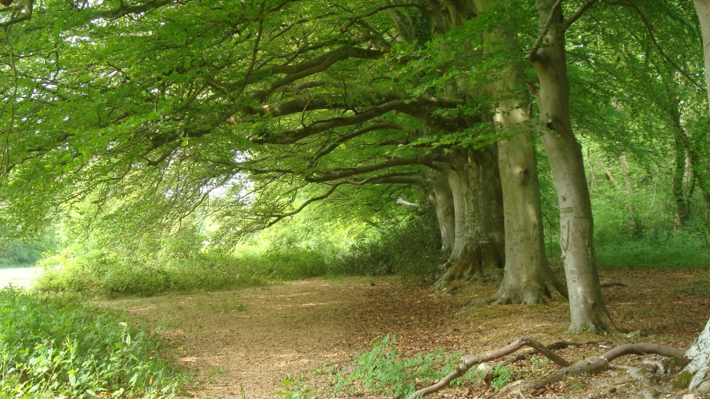 Stansted-beeches-facing-West